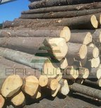Spruce Round Logs (Picea Abies)