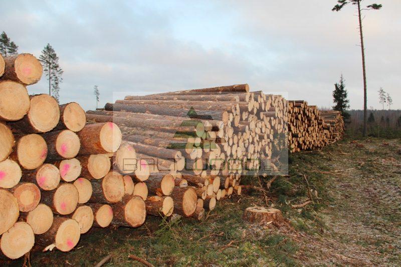Pine Round Logs Pinus Silvestris Balt Wood Enterprise Ou